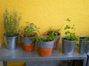 Herbs July 01