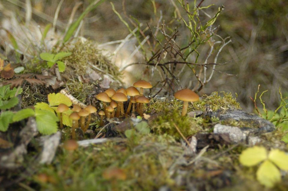 Black Forest 044