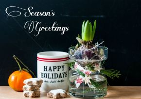 Season's Greetings DFN